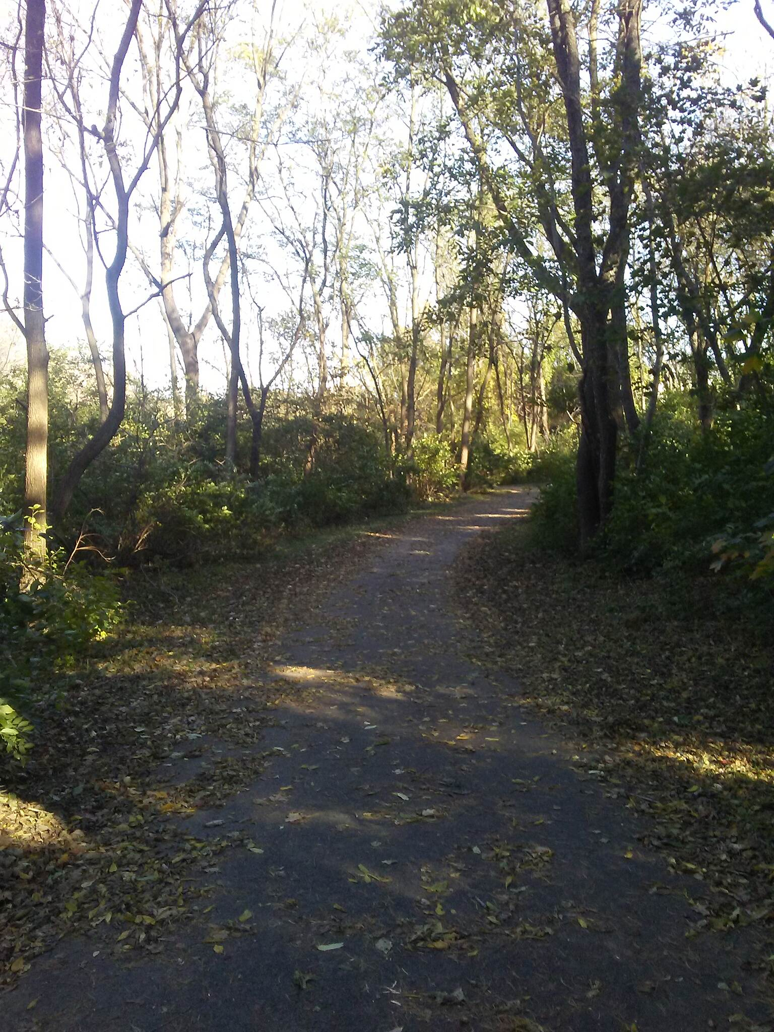 Manheim Township Community Park Trail Manheim Twp. Community Park Trail The portion of trail that connects the loops at the northern and southern ends of the park passes through these woods. Taken Nov. 2017.