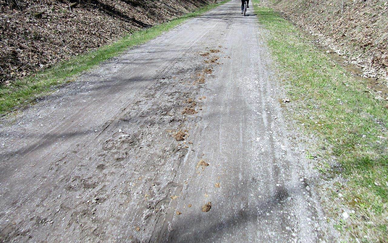 Maple Highlands Trail Trail surface The trail is also used by horses and horse & buggies.  Trail is in rough condition from the horseshoes and buggy wheels.  Dodge the manure!