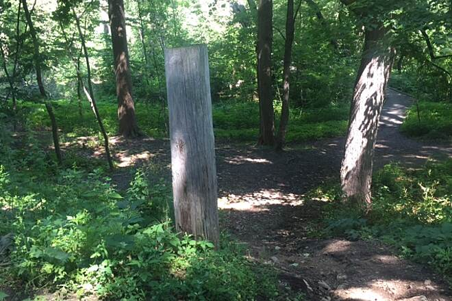 Marblehead Rail-Trail In The Woods