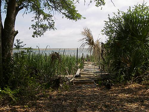 McQueen's Island Trail McQueen's Island Historic Trail 5-2-10 View toward the channel at the end of the trail, near 'The Tree.'