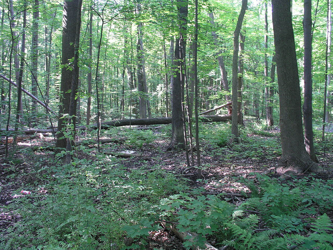 Metro Parkway Trail The Woods from the Path Viewing the woods along the Parkway path, just turn your head and enjoy.