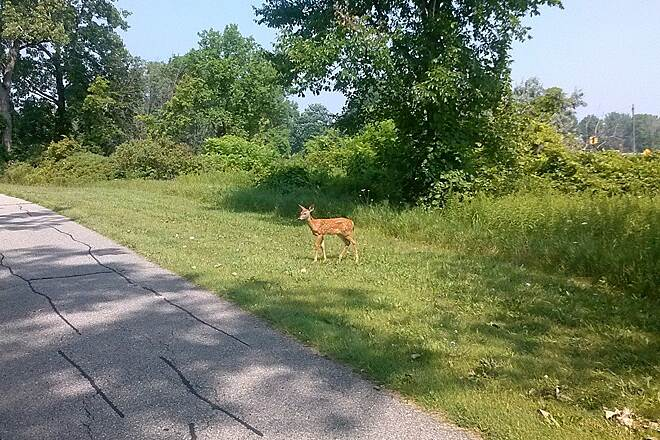 Metro Parkway Trail 16 mile seen this little fella just watching us go by