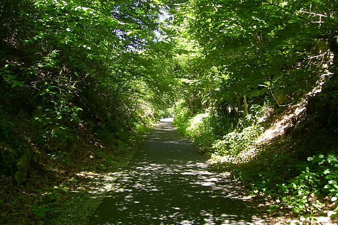 Middlebury Greenway Through wooded area