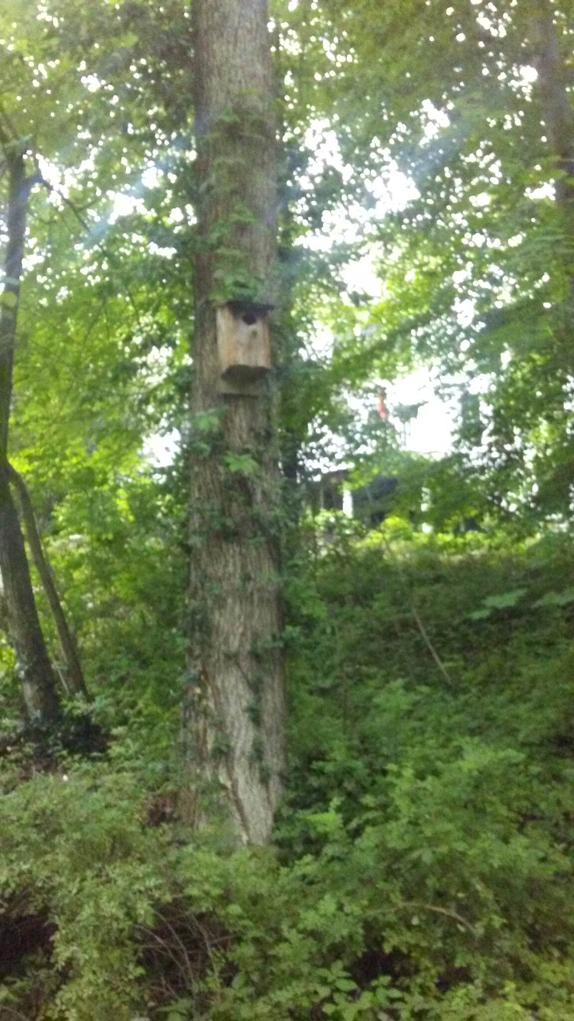 Mill Creek Trail (PA) Mill Creek Trail This birdhouse is one of many that can be seen along the trail.