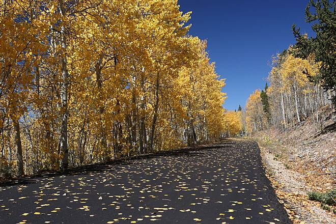 Mineral Belt Trail Autumn aspens We visited the trail in mid-September and the aspens were beautiful and golden. Photo by Scott Stark.