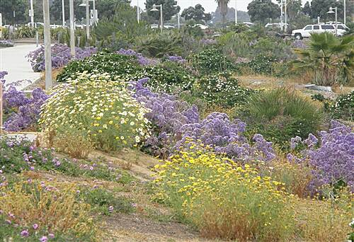 Mission Bay Bike Path   Wildflowers next to trail