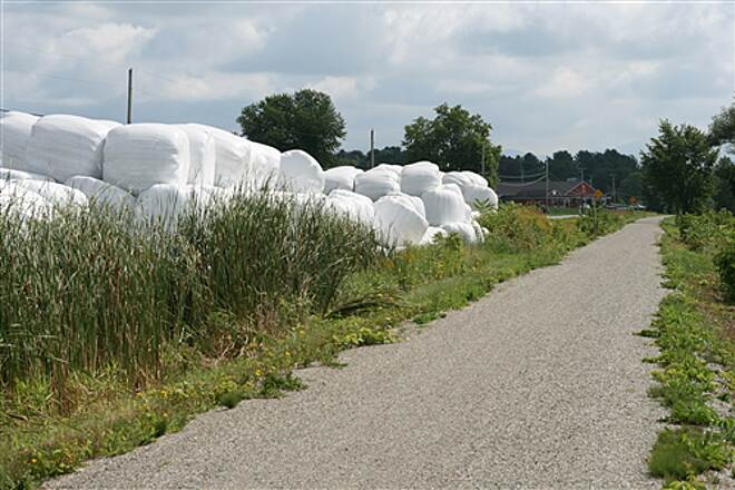 Missisquoi Valley Rail-Trail  Looking like giant marshmallows, plastic-wrapped hay bails are a common sight along the trail.