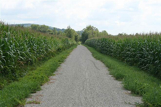 Missisquoi Valley Rail-Trail  A cornfield alleyway near Sheldon.  On our trip, the tallest stalks were at least 8-9 feet.