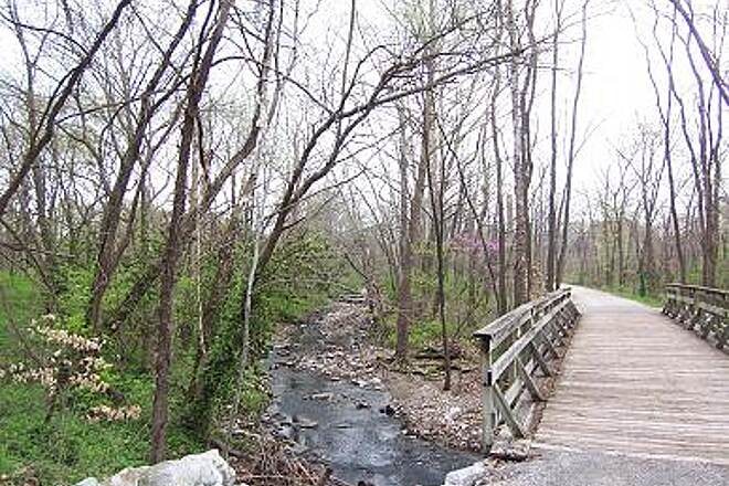 MKT Nature and Fitness Trail   The Dogwood trees were adding color to the trail.
