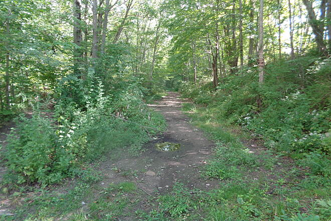Moosup Valley State Park Trail Trail east Barber Hill Rd View of rough trail east from Barber Hill Road, Plainfield on 9/8/16