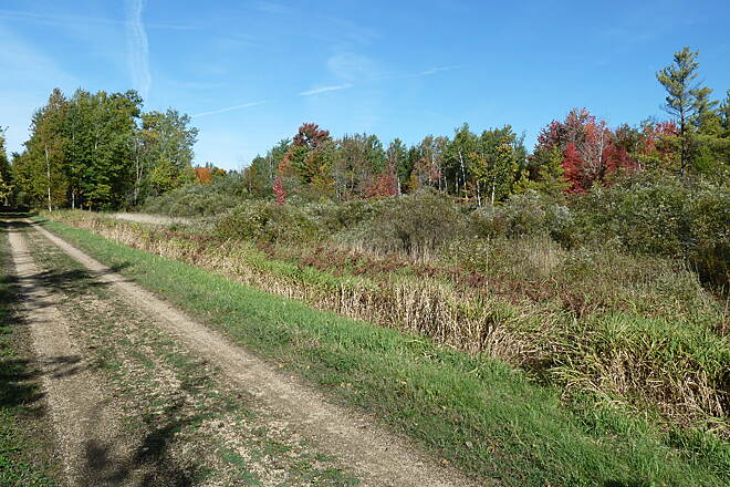 Mountain-Bay State Trail Near Shawano Colors and trail condition great!