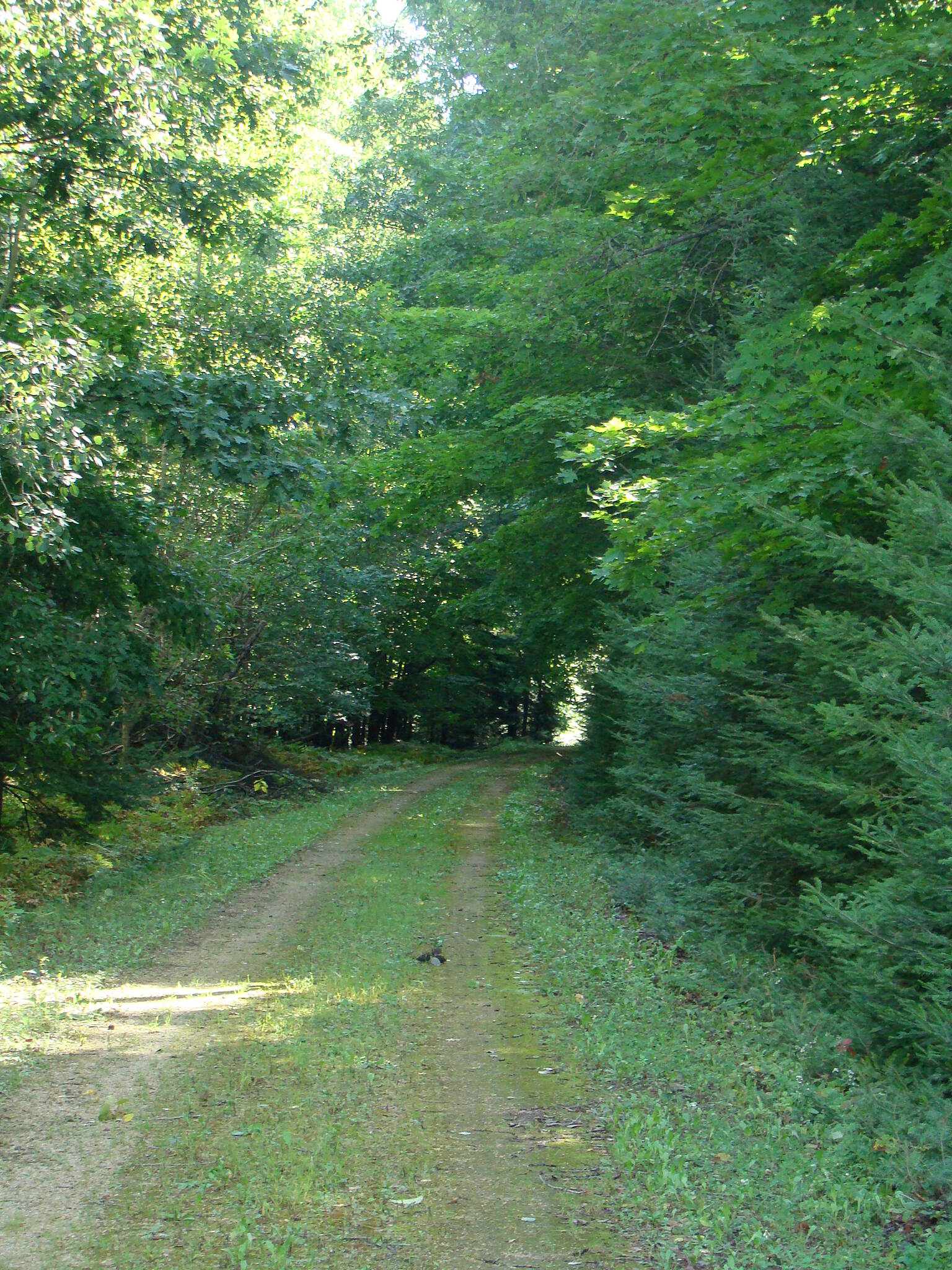 Mountain-Bay State Trail Shawano County Section