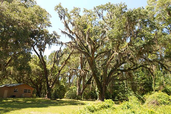 Nature Coast State Trail Nature Coast Trail - April 2012 Live Oaks with Spanish Moss - Old Town