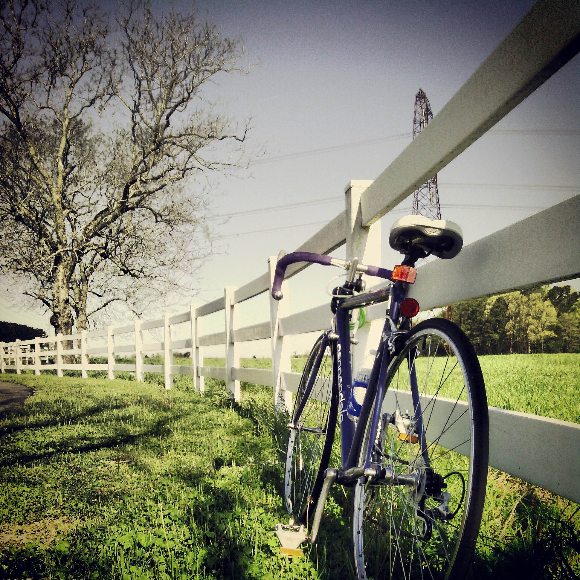 Neuse River Trail Early Morning Ride I took this picture one morning when I went riding on the Clayton side of the Neuse River Trail. It was such a beautiful morning and this is one of my favorite parts of the trail.
