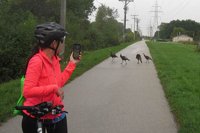 New Berlin Recreation Trail Turkey Time!!! Turkeys are a NEW addition to our bike rides!!!