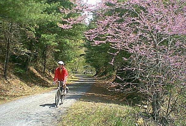 New River Trail State Park Redbuds Early April redbuds between Galax and Fries Jct.