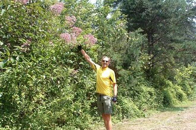 New River Trail State Park Joe-pye weed Joe-pye weed grows abundantly on the Pulaski end of the trail.