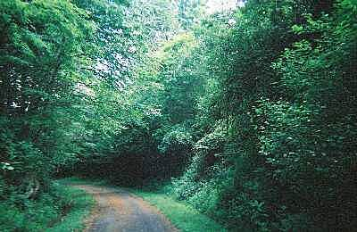 New River Trail State Park Typical view of trail in June Many parts of the trail are well-shaded in summer. The surface is mostly compacted cinder.
