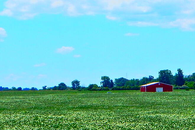 Nickel Plate Trail Crops are high and green. Starting from Rochester, the trail runs close to Hwy 31, but then gives way to beautiful farmland on both sides(shot taken on 8-7-16)