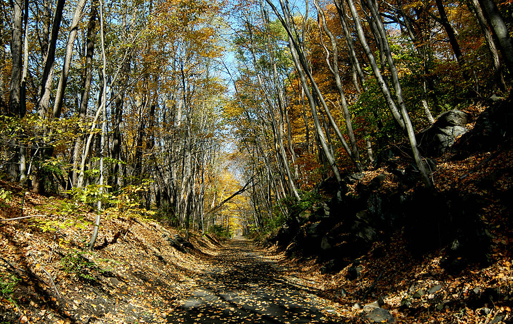 North County Trailway North County Trailway in Fall 2 Cut through Rocks