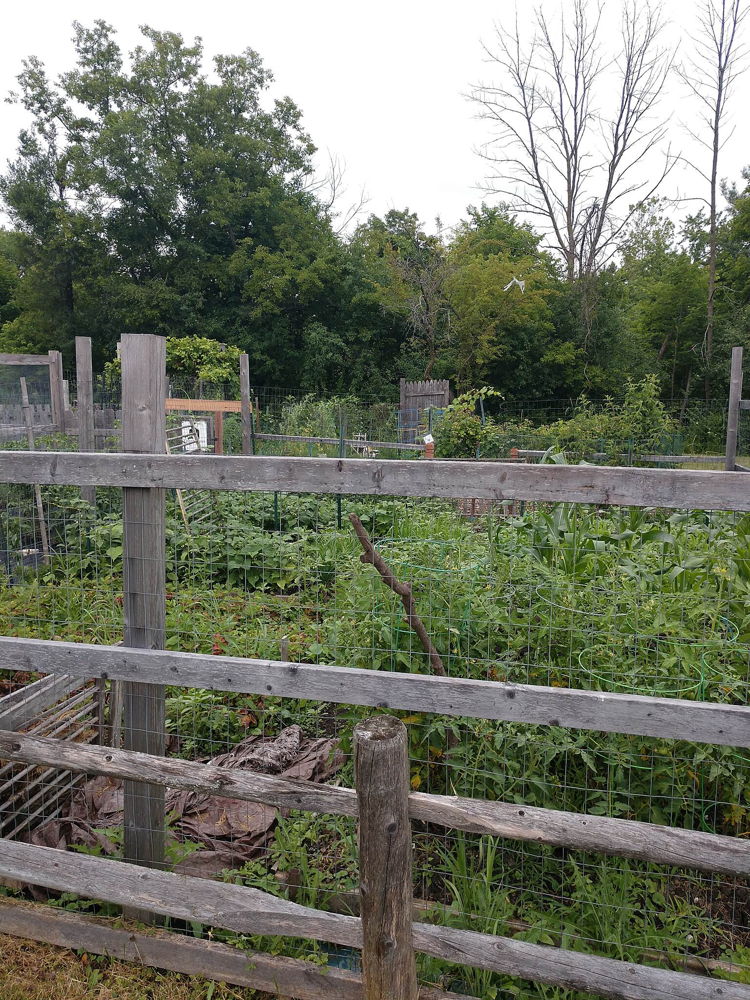 North Shore Channel Trail community garden