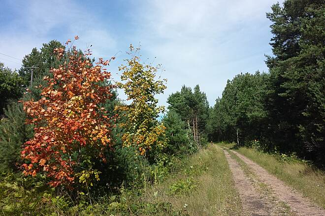 North Western State Trail North of Alanson Between Alanson and Pellston