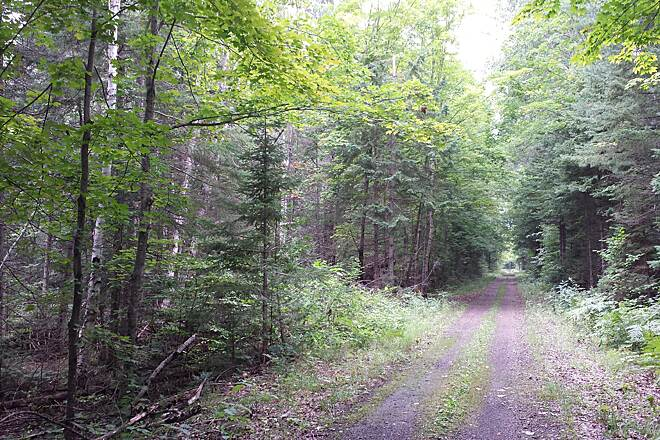 North Western State Trail North of Pellston Near Levering, north of Pellston