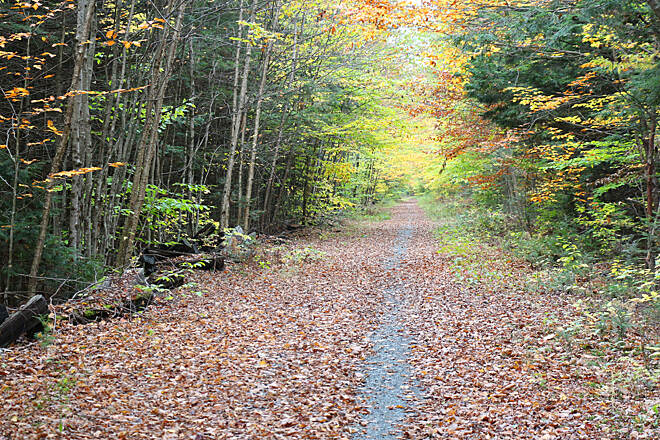 Northern Rail Trail Foliage on the NRT in Grafton Shot of the foliage along the Northern Rail Trail in Grafton, NH.  Taken as part of the Peter Crowell memorial ride on October 12, 2013.