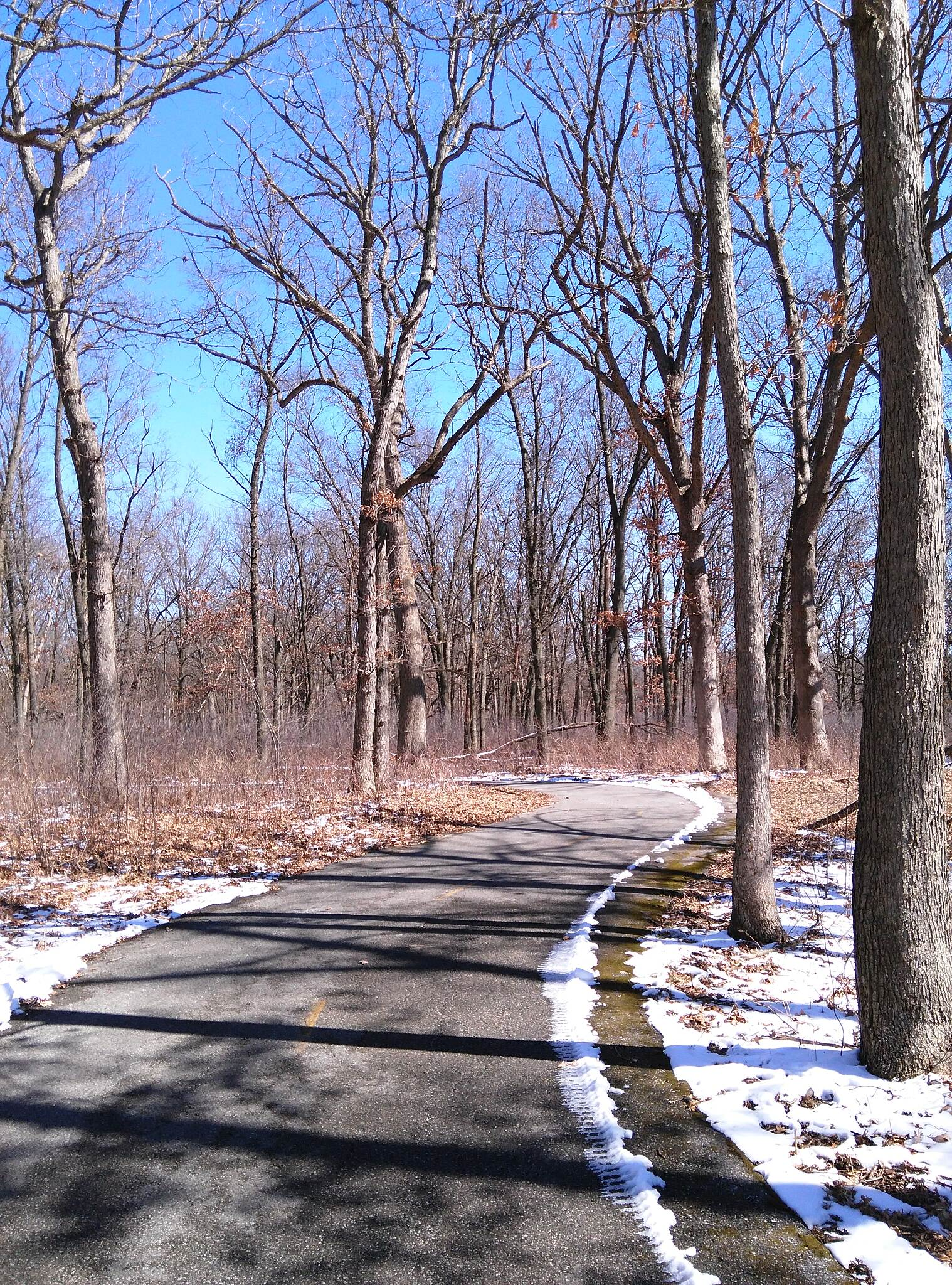 Oak Savannah Trail Trail by Oak Ridge Prairie  Walking the trail March 16, 2017