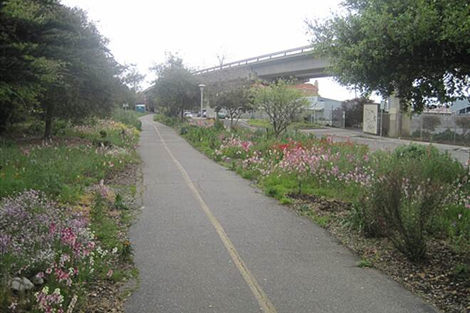 Ohlone Greenway  Spring Flowers near Del Norte
