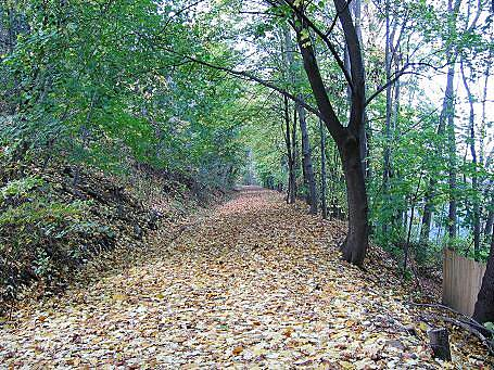 Old Erie Path Old Erie Path Trail surface in Piermont under the cover of leaves. Nyack is straight ahead.