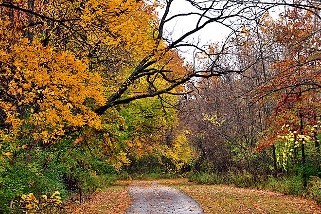 Olentangy Trail Autumn colors are spectacular along the tree-lined trail. Photo by piercerdave.
