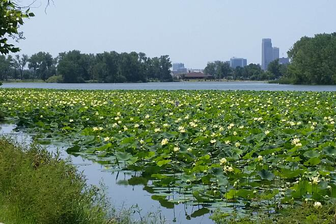 Omaha Riverfront Trail Carter Lake Lotus in bloom on Carter Lake along northern section of trail.