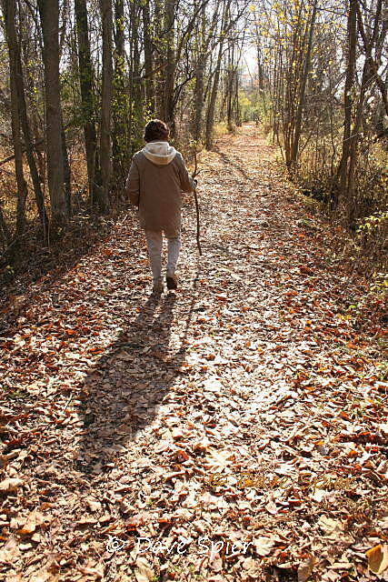 Ontario Pathways Rail Trail Ontario Pathways - fall Walking the leaf-covered trail at the Phelps end of Ontario Pathways on a November day...