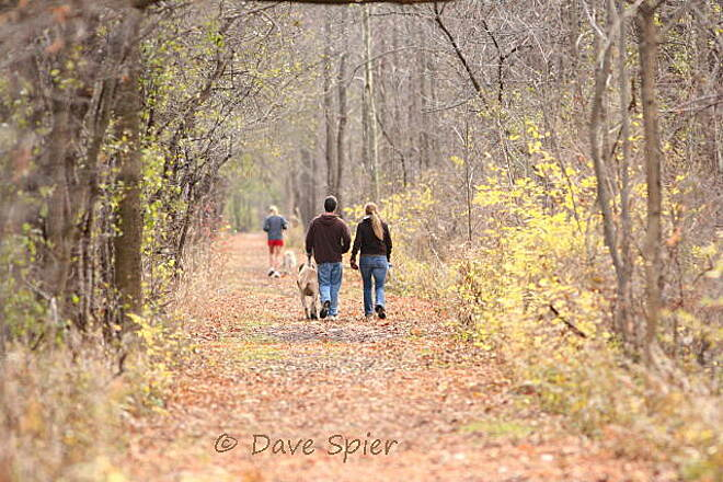 Ontario Pathways Rail Trail Ontario Pathways - autumn 2 dog-walking on the Phelps section of Ontario Pathways on a November day...