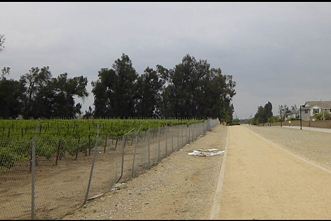 Pacific Electric Inland Empire Trail Vineyard Vineyard adjacent to trail in Rancho Cucamonga between Etiwanda and East Avenues.