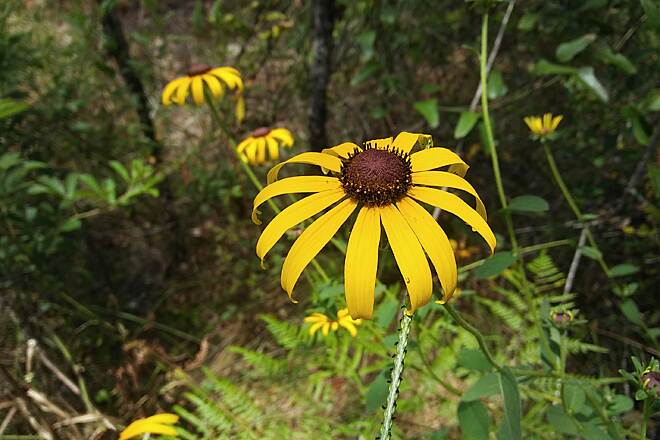 Palatka-to-Lake Butler State Trail Flowers in Summer Every day another flower blooms....