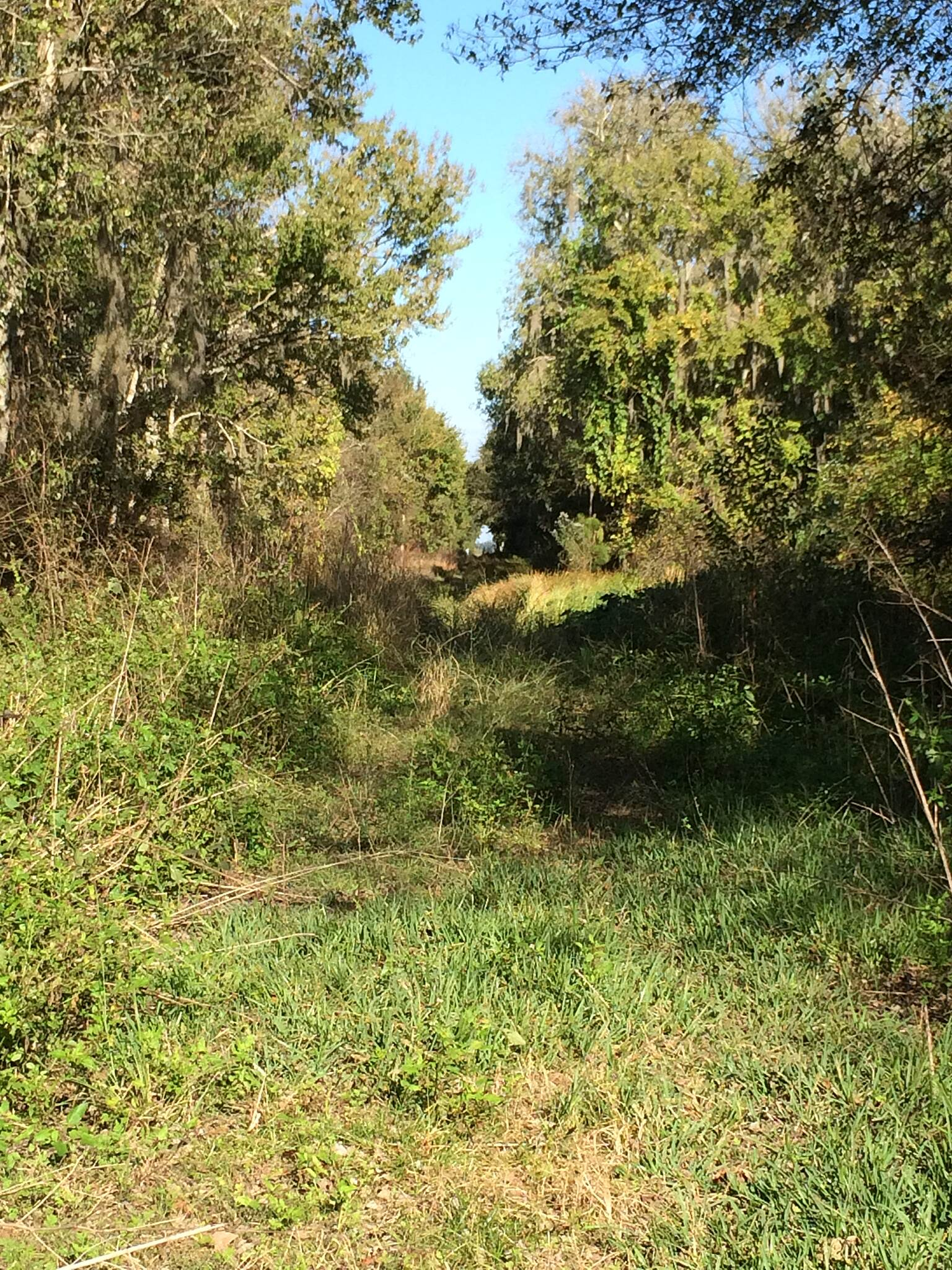 Palatka-to-St. Augustine State Trail Future part of trail. A shot of the future trail as is passes by the Deep Creek Conservation Area (Edgefield storm water treatment area). When the trail is paved by here people will have the opportunity to hike or bike and explore the area. Between East Palatka & Hastings.