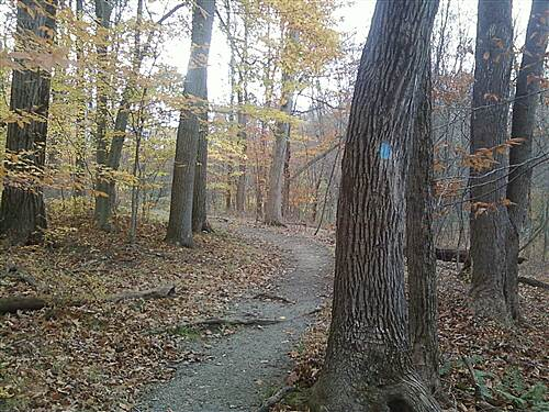 Patriots' Path (NJ) Patriots Path Blue Blaze Through Washington Valley Nice view of the trail in Washington Valley