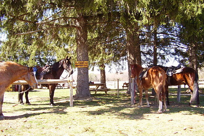 Paulinskill Valley Trail Horses at Blairstown Airport Posted sign says 'Parking for Horses only'  at the Blairstown Airport.