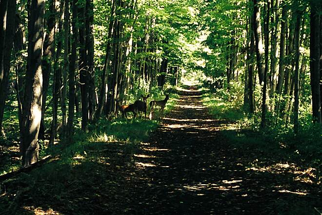 Paulinskill Valley Trail Wildlife on the trail Found a family of deer watching me as I rode by. Note that this is the widest the trail seems to get.