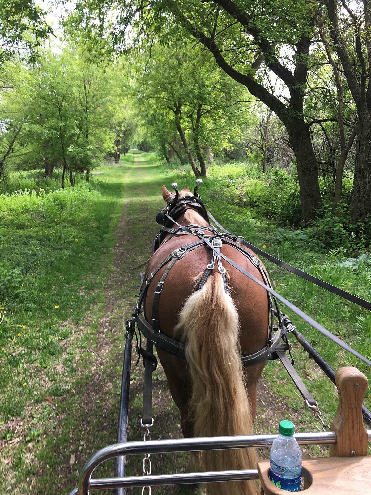 Pelishek-Tiffany Nature Trail Trail leaving Clinton WI Oberlander mare Nicky