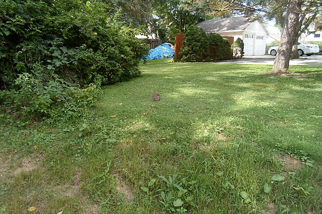 Pennsy Trail (PA) Pennsy Trail Look closely, and you can see a rabbit on the strip between the trail and the yard of a nearby residence. Taken July 2016.