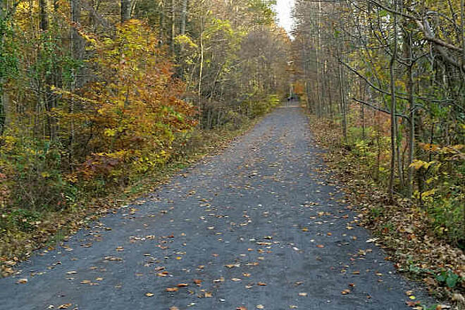 Pennypack Trail Fall Comes to the Trail