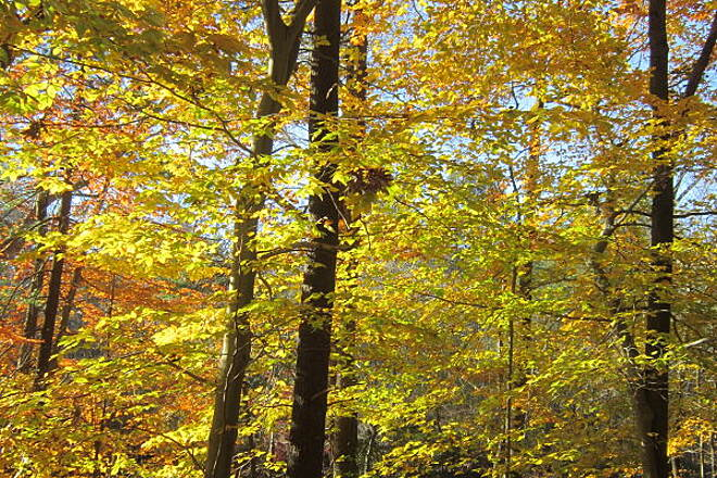 Pennypack Trail More Fall Colors!
