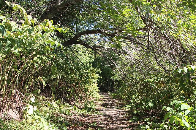 Pennypack Trail Pennypack on the Delaware Nature Trail  Off of the main Trail, there is a nature trail that runs directly alongside of the Delaware River. Lots of turtles, birds and other wildlife to check out. The trail reconnects with the main trail after about .25 miles.