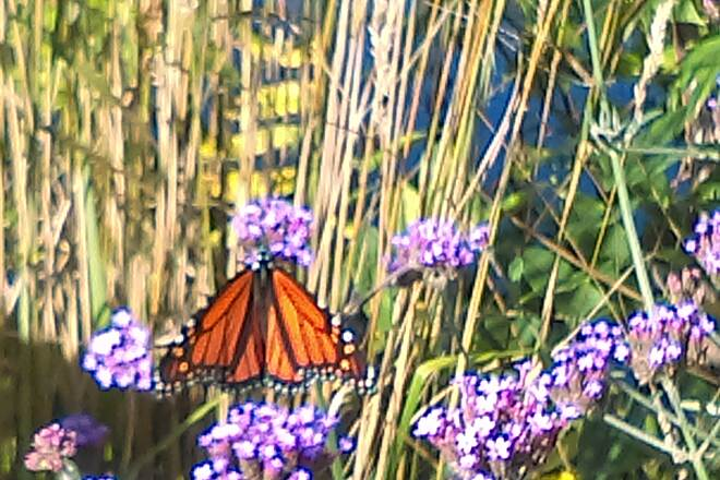 Pere Marquette Rail-Trail Nature's beauty Just entering the Tridge, found a beautiful butterfly resting.