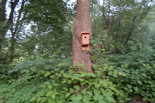 Perkiomen Trail Perkiomen Trail Birdhouse off the trail between Lower Perkiomen County Park and Oaks.