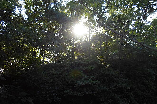 Perkiomen Trail Perkiomen Trail Late afternoon sun shining through the trees north of Collegeville. Taken July 2015.