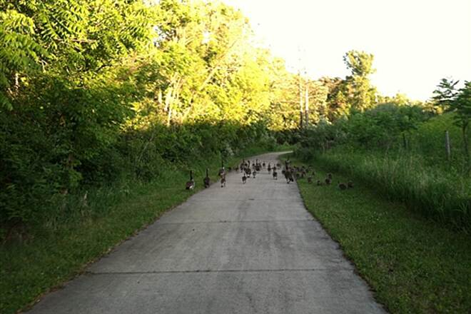 Pine Lake Trail Pine Lake Trail Users A family of geese takes advantage of the Pine Lake Trail